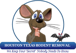 Houston Texas Rodent Removal | Help With Insurance | Remove Rodents